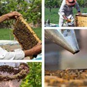 خرید دودی زنبورداری