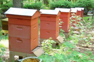 ویژگی های کندوی عسل جدید در دنیا