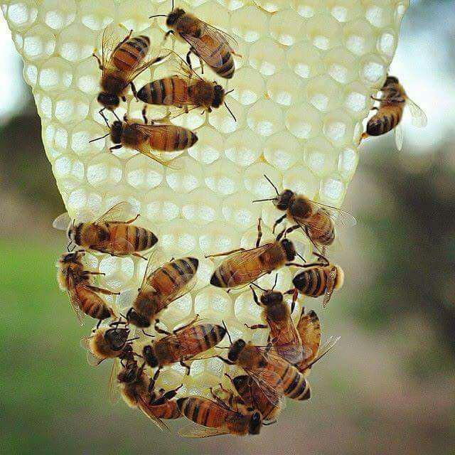 فرآورده های قابل فروش زنبورعسل