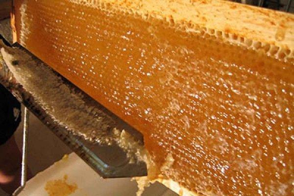 زمان برداشت عسل از کندو در اروپا
