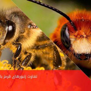 تفاوت زنبور قرمز و زرد