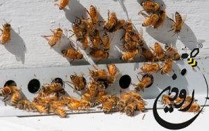 داروهای تقویتی زنبورعسل