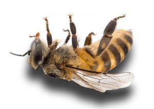 فروش زنبورعسل