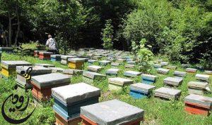 خرید زنبورعسل