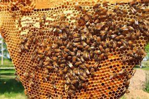 قیمت کندوی عسل چند است؟