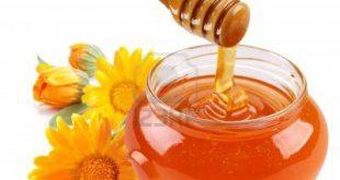 خرید عمده عسل طبیعی