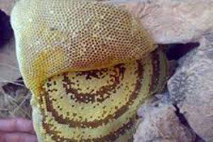 عسل کوهی طبیعی چه خواصی دارد؟