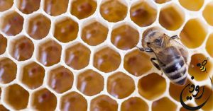 موم عسل طبیعی از فروشگاه رودین شاپ