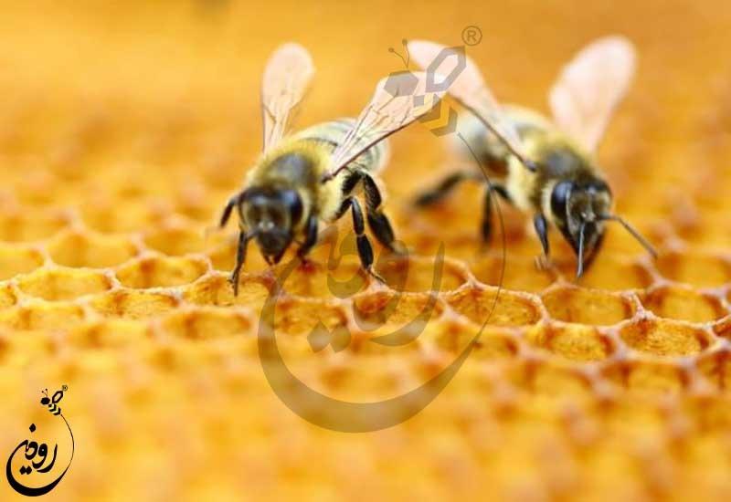 قیمت خرید زنبور عسل