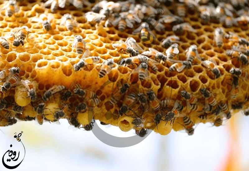 قیمت کندوی عسل