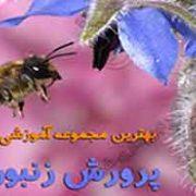 فیلم آموزش زنبورداری