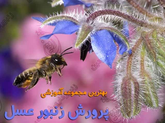 سی دی آموزش زنبورداری